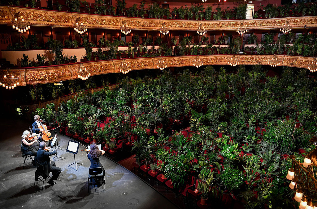 Barcelona Opera House Fills Seats With Plants For Socially Distanced Concert