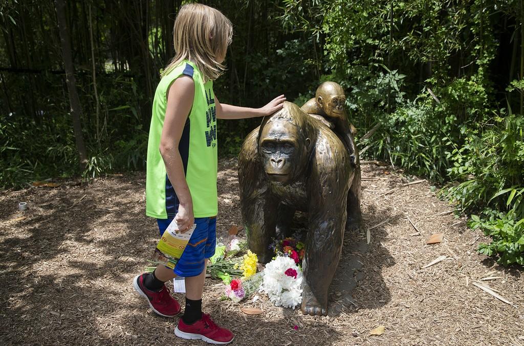 the Gorilla World exhibit at the Cincinnati Zoo