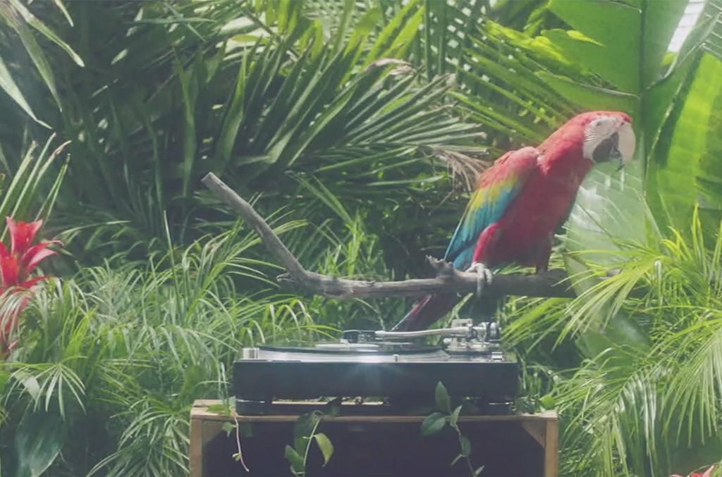calvin-harris-party-parrot-screenshot-billboard-1548