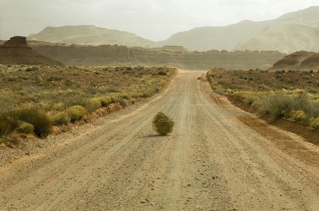 Desert Tumbleweed