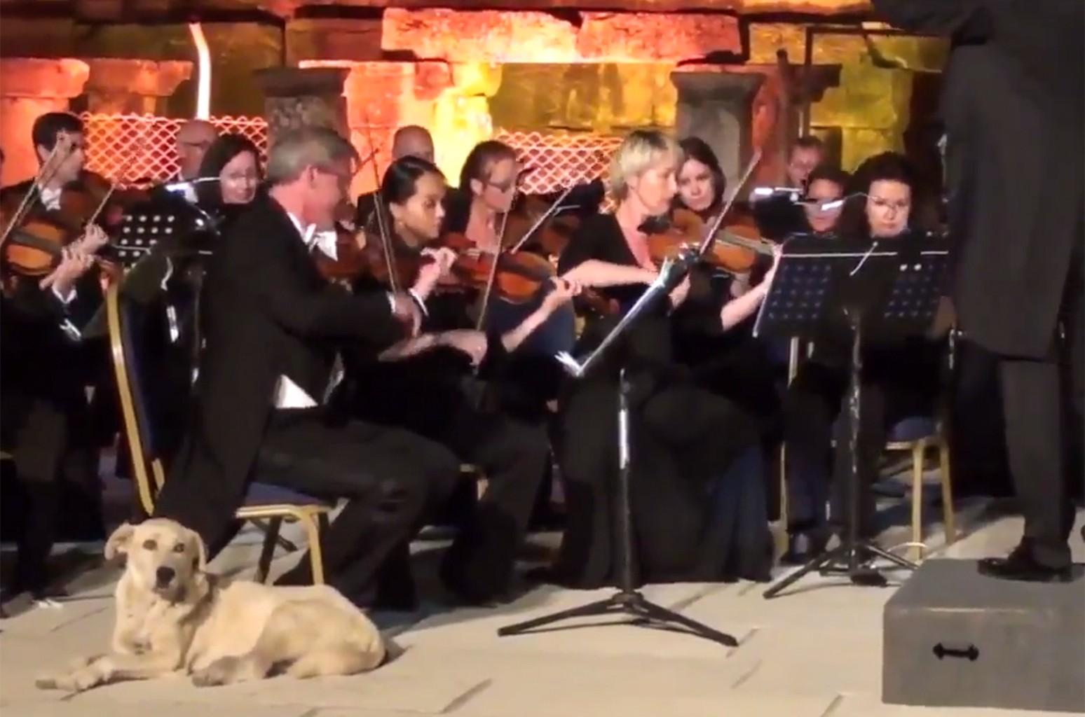 Dog Orchestra 2017