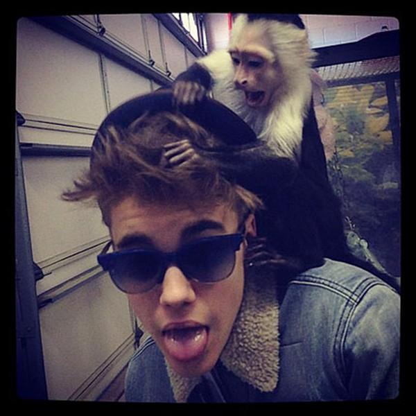 justin-bieber-instagram-monkey-600