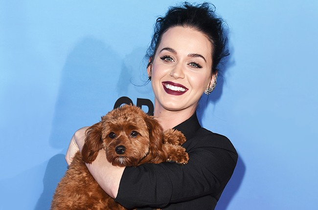 Katy Perry and her dog Butters