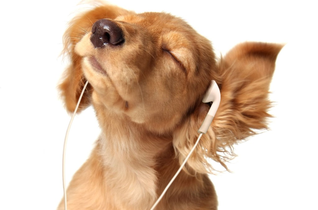 puppy-headphones-a-billboard-1548