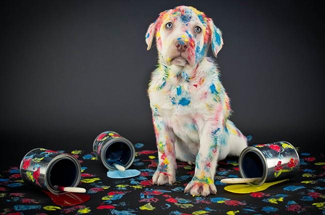 Paint Puppy Biz