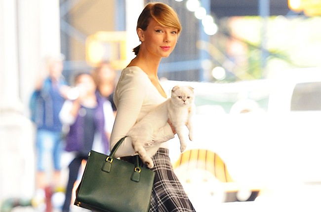 Taylor swift and cat Olivia Benson