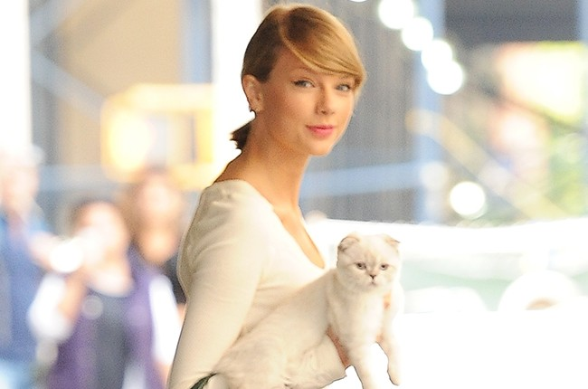 taylor swift and cat nyc