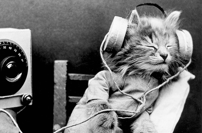 cat music radio headphones